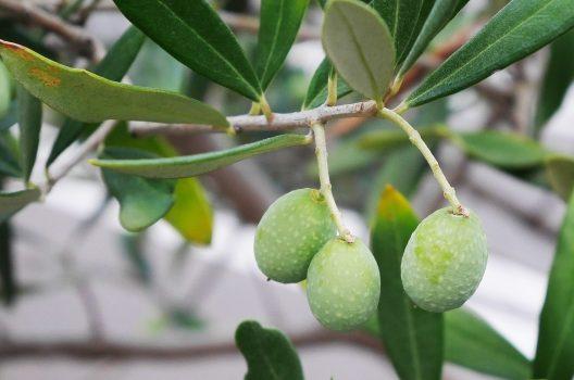 低木の種類1:シンボルツリーにおすすめ!常緑樹