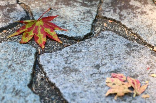 庭の石畳で家のオシャレ度上昇中!あなたのセンスが光る敷石の並べ方