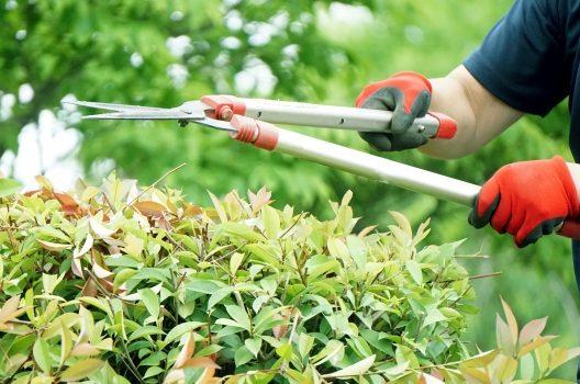 剪定の基本をイラスト付きで解説!庭木を整える方法・時期・道具まとめ