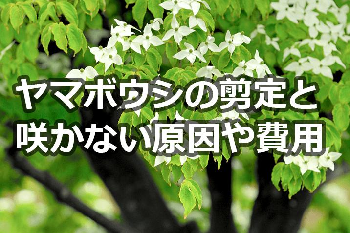 ヤマボウシの剪定と咲かない原因と費用