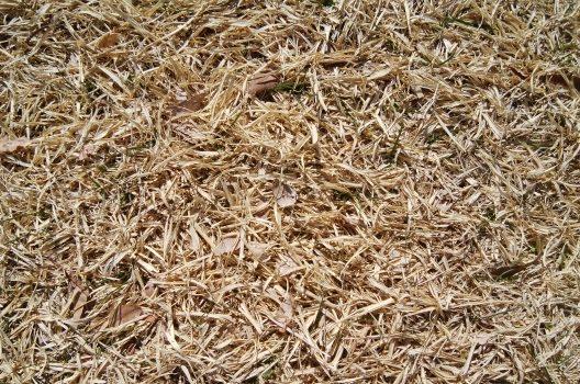 芝生が枯れてしまうトラブルに要注意!
