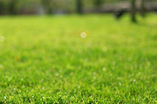 失敗しない芝生の張り方手順