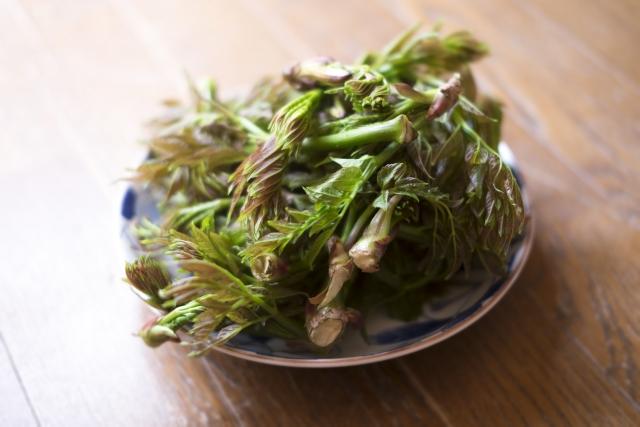 タラの木の剪定や栽培方法など│適した時期にタラの芽を収穫しよう