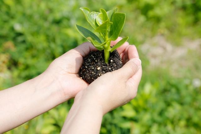 栽培環境と適した土