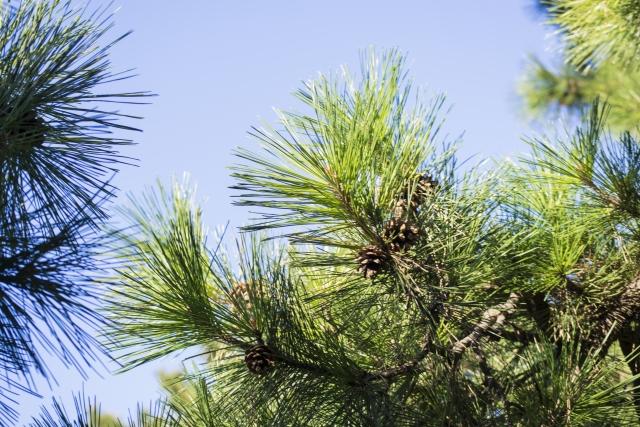 常緑樹の種類