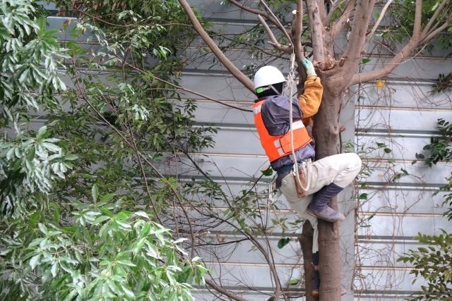 業者による庭木剪定の費用相場