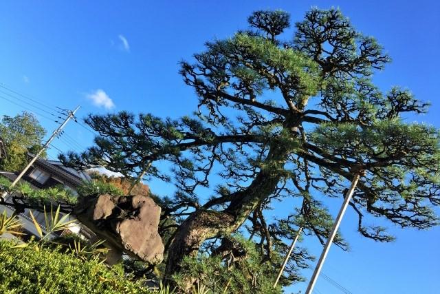 庭木の透かし剪定のコツとは?方法や時期を知り美しい姿を取り戻そう