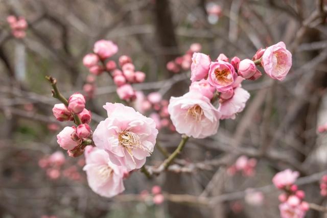 杏の基本的な栽培方法
