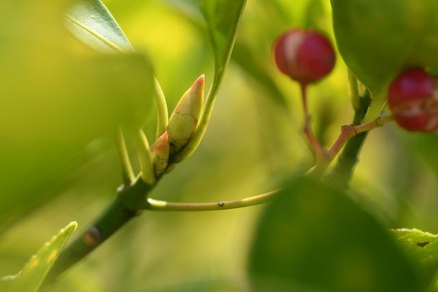 植え付け・植え替え時期は春と秋