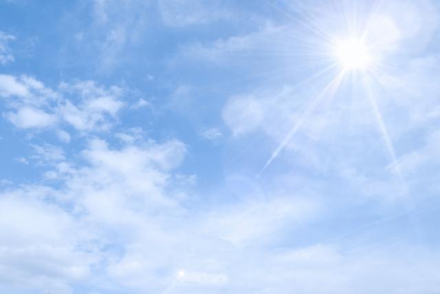 日当たりの良い場所で育てよう