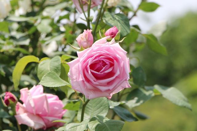 春:4~6月は花がら摘み