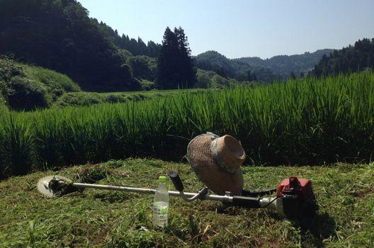 面倒な草刈り…とにかく楽に作業したい!おすすめの便利グッズ7選
