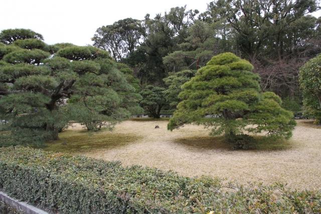 庭木の高さを剪定(芯止め)で抑えて管理しやすく!その方法を解説