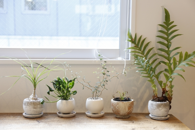 観葉植物の剪定で知っておきたい基礎知識!作業後の対応方法も紹介