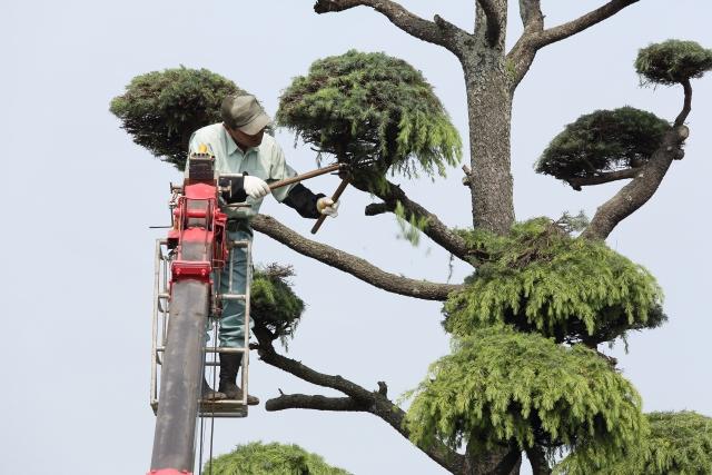 強剪定で木が枯れるのを防ぐためにはどうしたらいい?剪定時期に注意