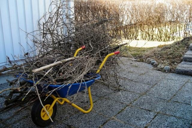 剪定枝の処分方法を知っておこう!庭木の剪定費用についても紹介
