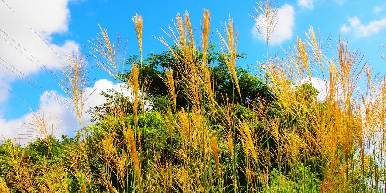 草取りを劇的に楽に!雑草を根絶させる2つのステップ