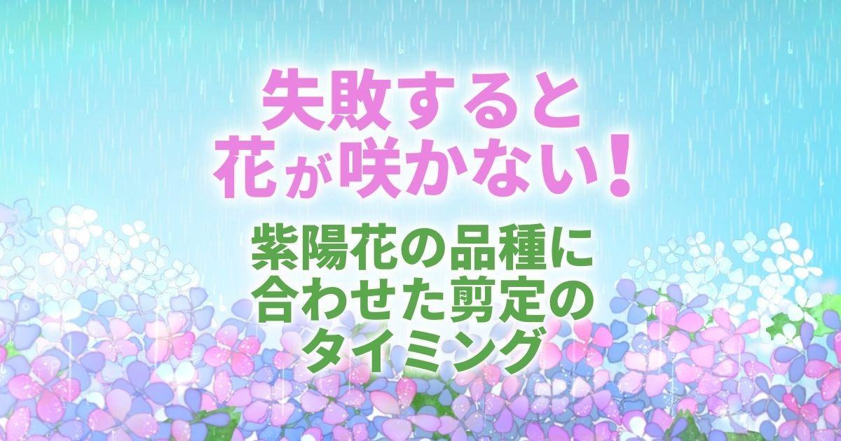 紫陽花(アジサイ)の剪定は時期が重要|花を減らさない方法を紹介