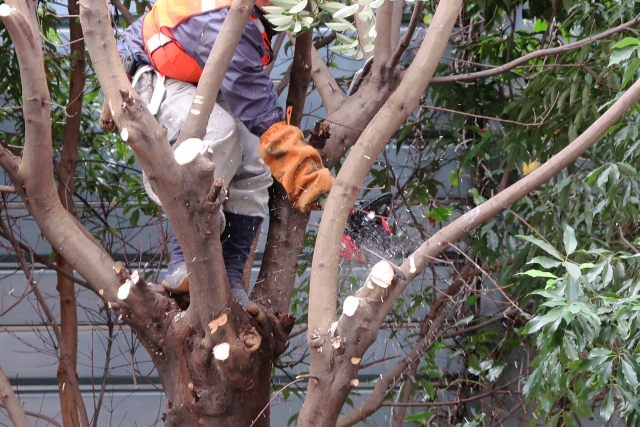 植木屋は庭木の管理と手入れが専門