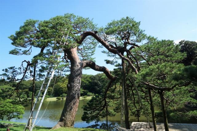 剪定はしごや脚立の選び方と注意点!庭木の作業を安全におこなうには