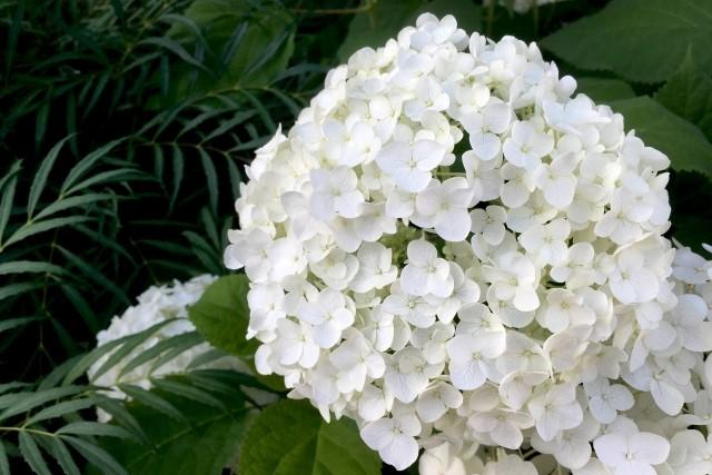 剪定の強弱で花の咲き方をコントロール