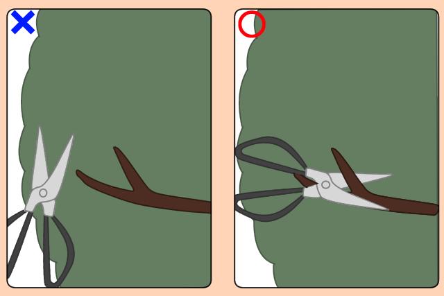 ハサミの持ち方と使用する剪定バサミ