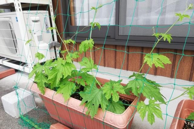 種まき・植え付けの手順