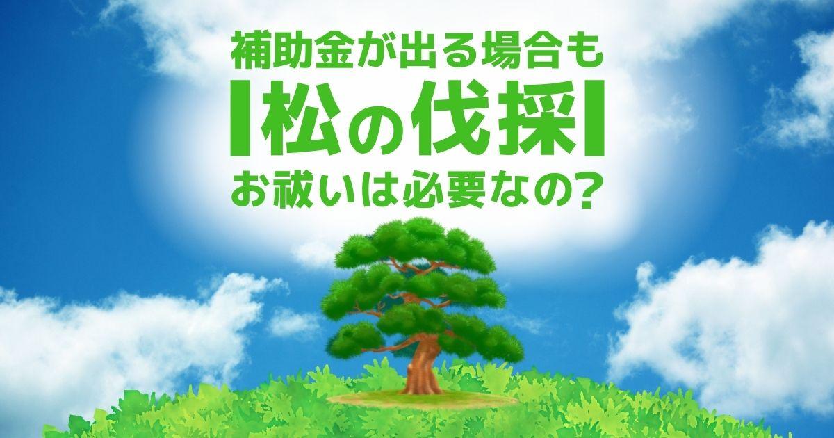 松の伐採前・伐採法・金銭面の重要ポイントを一挙確認
