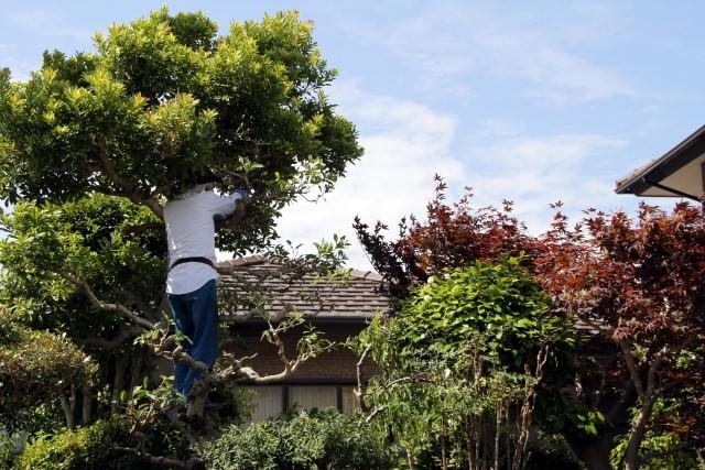 ダスキンで剪定の依頼はできる?庭木のお手入れにかかる料金を解説!