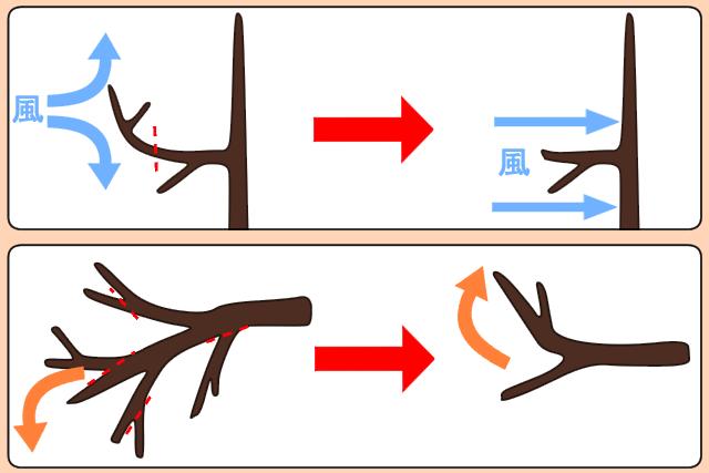 枝の曲がり目