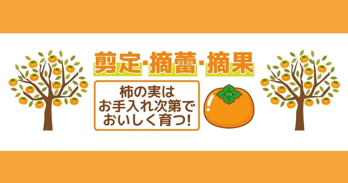 柿の木の剪定方法!適切な時期やおいしい実を収穫するためのポイント