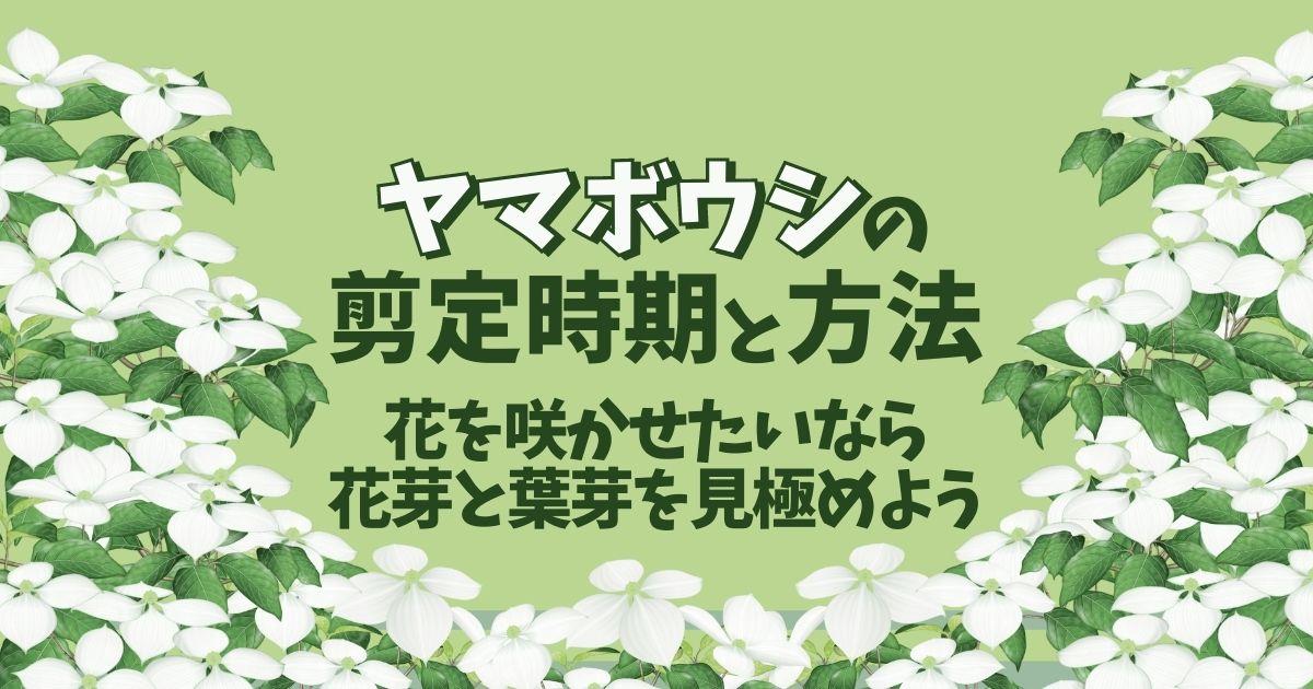 ヤマボウシの剪定時期と方法花を咲かせたいなら花芽と葉芽を見極めよう