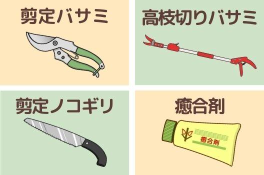 【必要な道具】清潔なハサミと癒合剤で切り口を守ろう