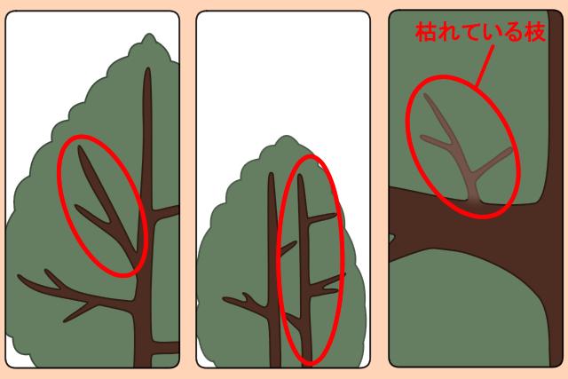 切る枝の見分け方