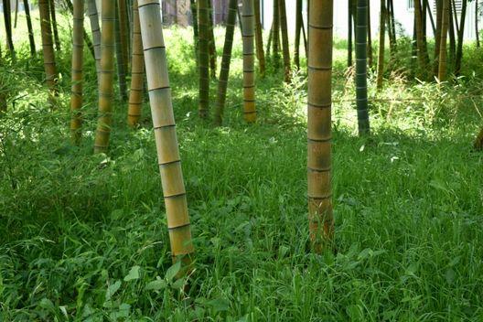 竹の伐採の時期や方法!自分での伐採はリスクも要チェック
