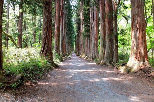 杉の伐採の費用の内訳と注意点をわかりやすく解説!