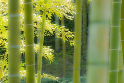 伐採前におさえるべきこと!竹伐採に適した時期と準備するもの