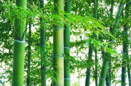 竹の伐採方法と作業時のポイント