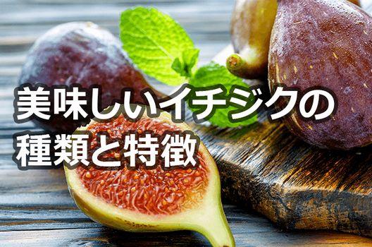 イチジクの種類と苗木の選び方–イチジク栽培をしたい方へ