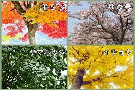 落葉広葉樹の剪定を依頼する時期