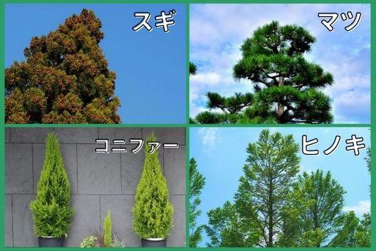 常緑針葉樹の剪定を依頼する時期