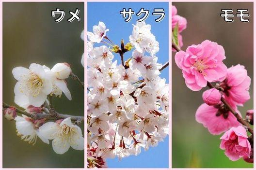 真夏に花芽ができる木:ウメ、サクラ、モモなど