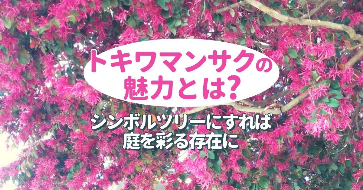 トキワマンサクのシンボルツリーは育てやすくて生垣にもおすすめ!