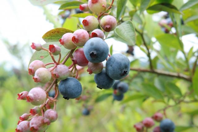 美味しい果実が実る