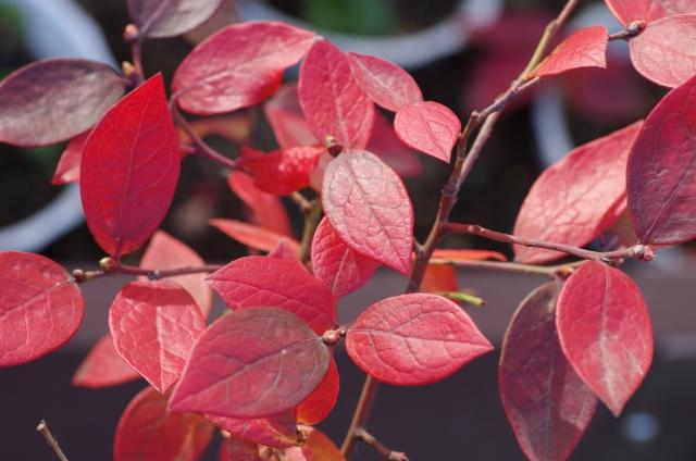 秋から冬は紅葉も楽しめる