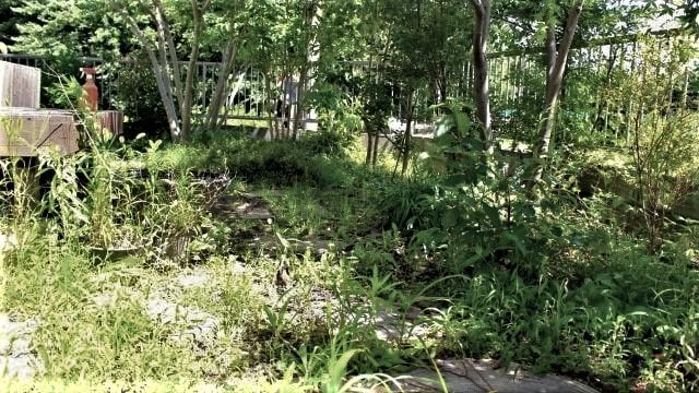 雑草で荒れた庭-
