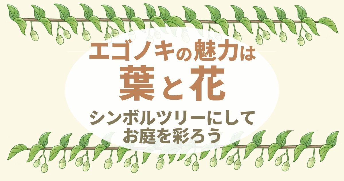 エゴノキのシンボルツリーは自然樹形が美しい|花は庭のアクセントに