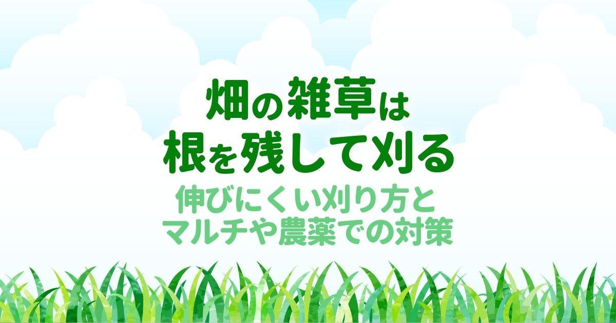 畑の雑草対策で根から抜くのは逆効果|豊かな土壌を作る草刈りの方法
