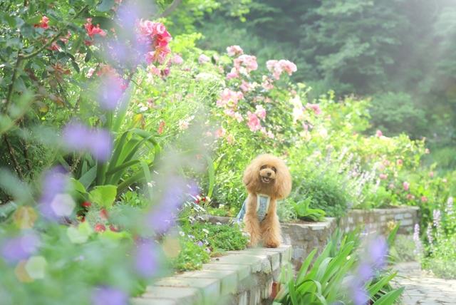 広い庭 雑草対策